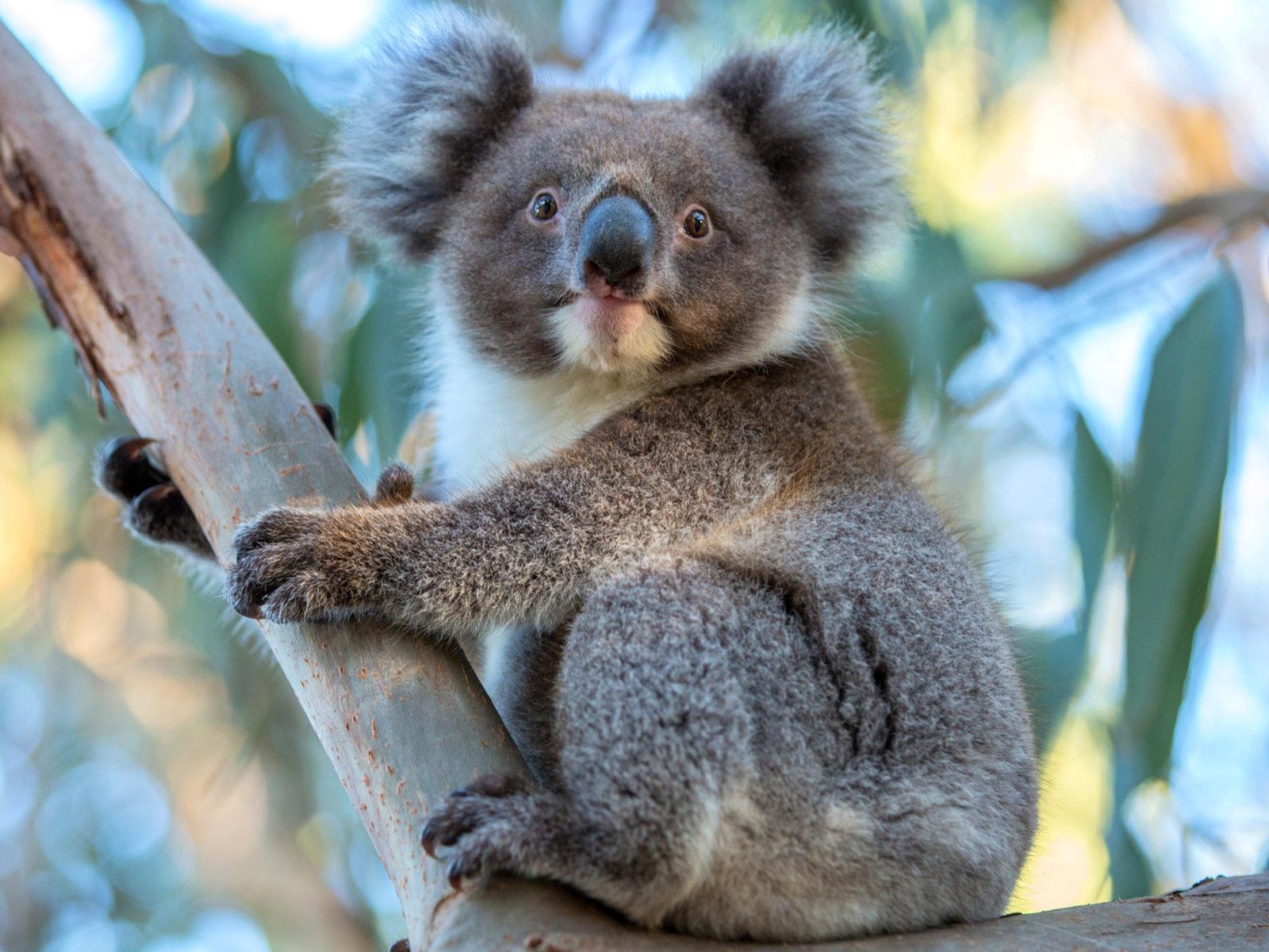 Tourism Australia©Greg Snell