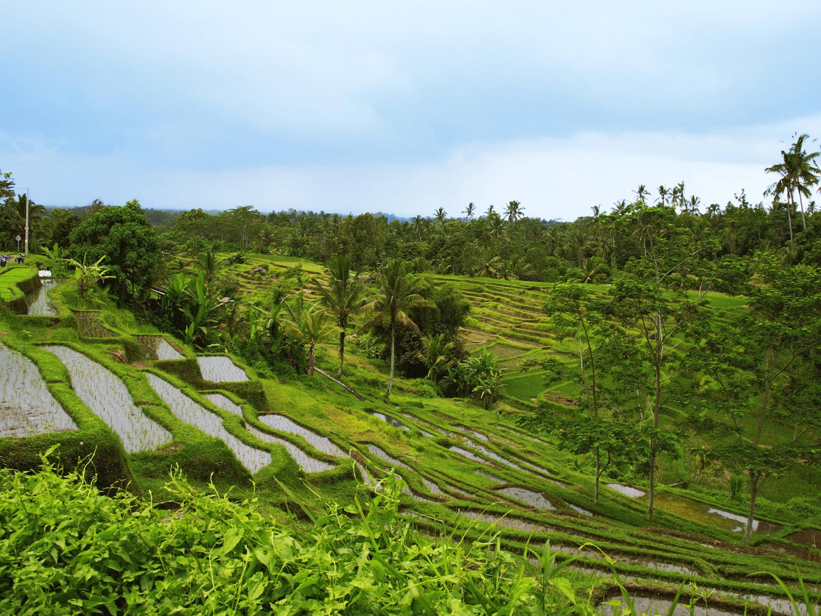 UNESCO Weltkulturerbe: Die Reisterrassen von Jatiluwih