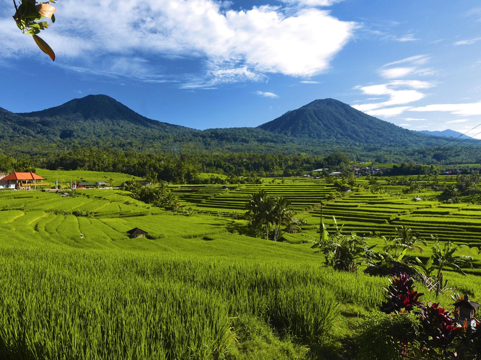 Reisterrassen in Jatiluwih, ©Visit Indonesia Tourism
