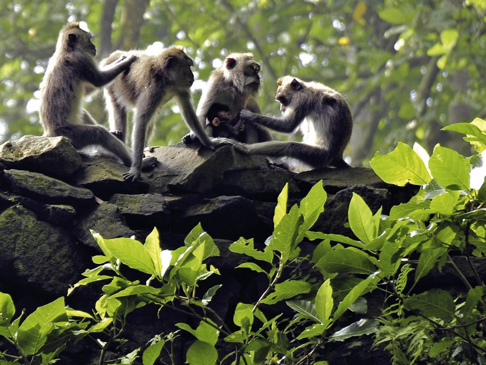 Ubud, Monkey Forest, ©Visit Indonesia Tourism Office