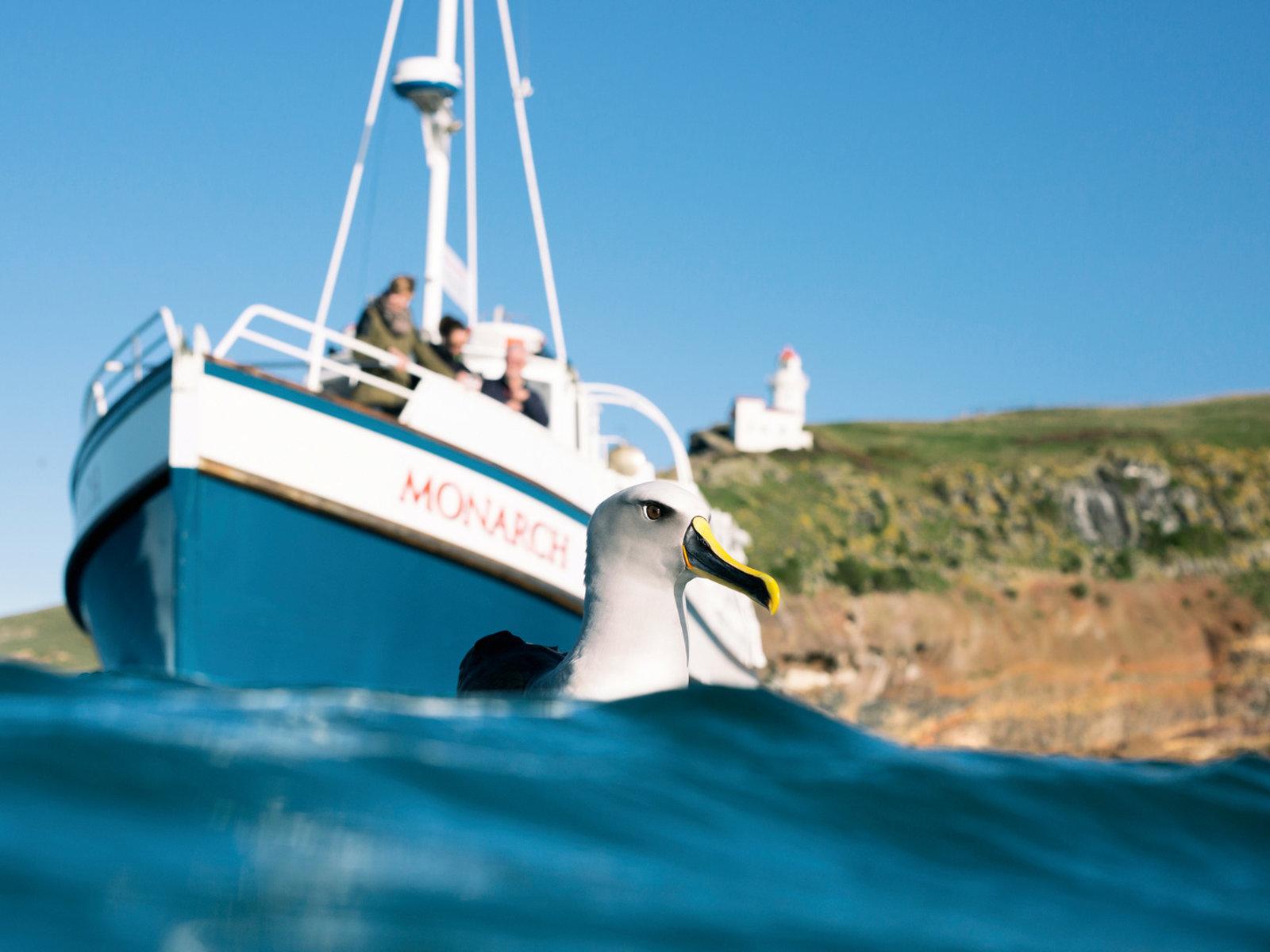 Dunedin, Otago Halbinsel, Monarch Wildlife Cruise
