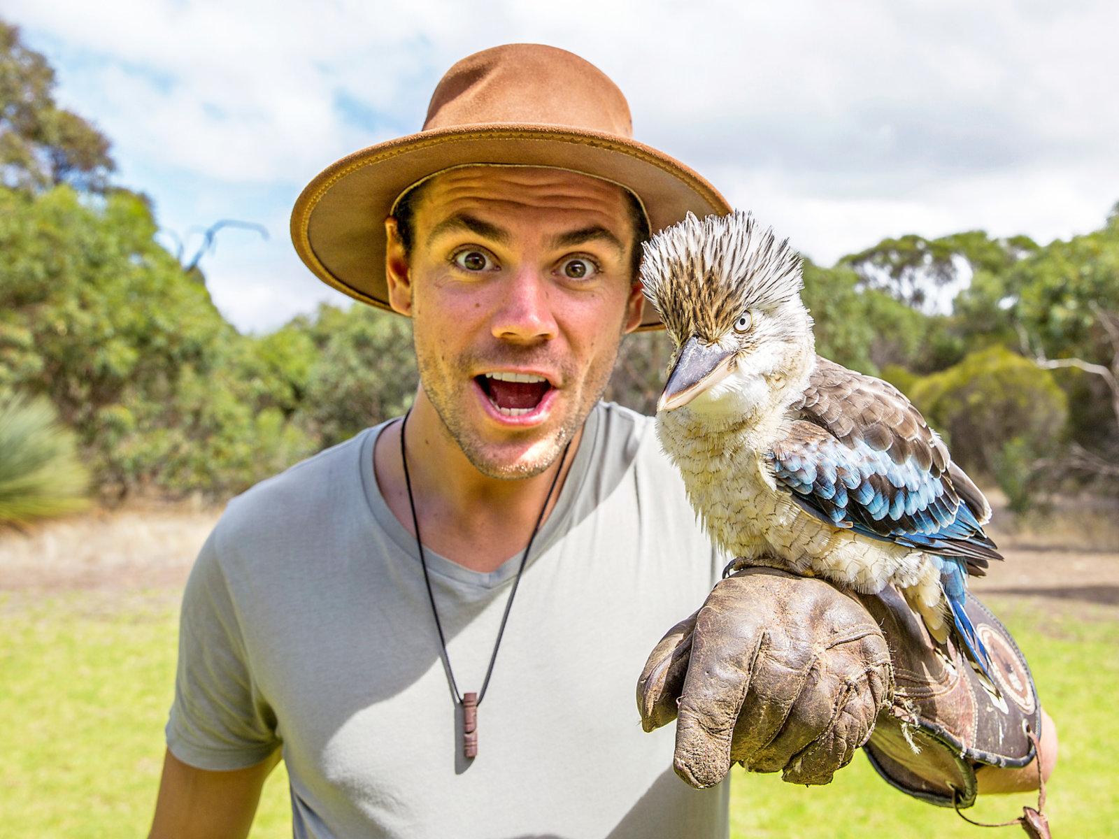 Kangaroo Island, Kookaburra (Jägerlieste) ©Tourism Australia