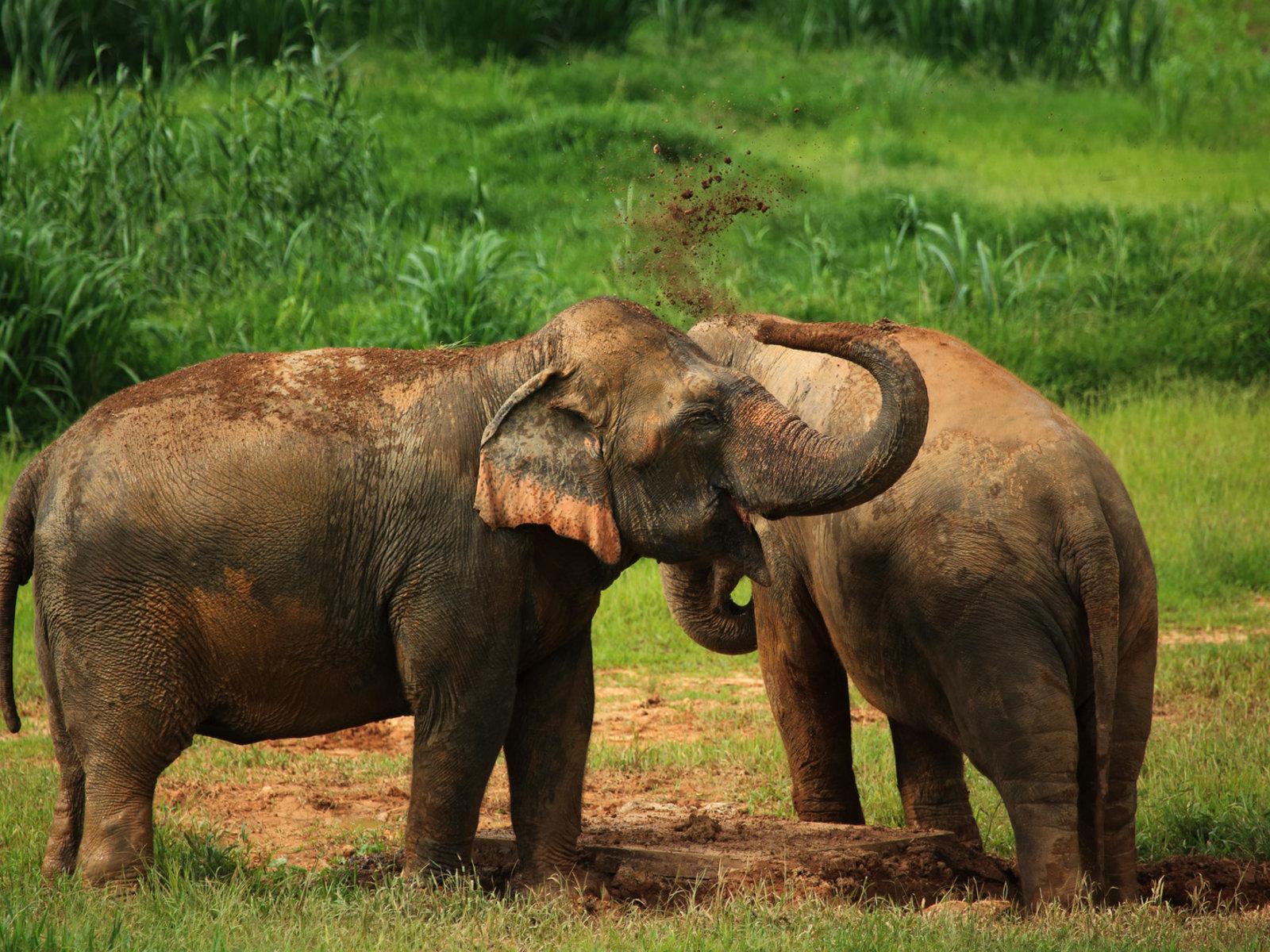 Elefanten in Campnähe