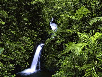 Monteverde Regenwald
