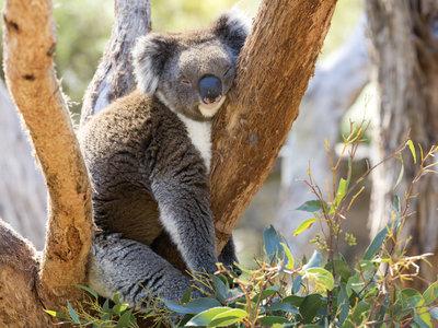 Tourism©  Australia, Greg Snell