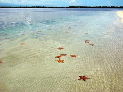 Starfish Beach, Bocas del Toro