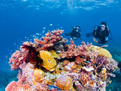 Great Barrier Reef, Challenger Bay Drift at Ribbon Reefs Challenger Bay Drift at Ribbon Reefs, Great Barrier Reef