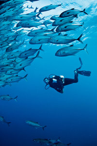 Great Barrier Reef, Challenger Bay at Ribbon Reefs © Tourism Australia